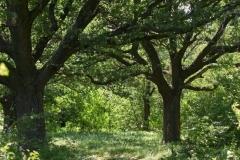 Андріївський ліс, такожж відомий як Макаренський сад