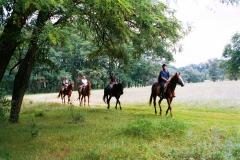 Коні в урочищі Ярина